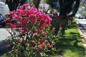 Asume municipio mantenimiento de jardines
