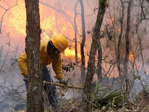 Muere brigadista en incendio forestal en Oaxaca