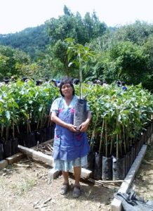 Realizan en Oaxaca padrón de productores de aguacate