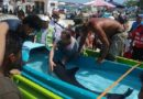 Salvan de morir a delfín